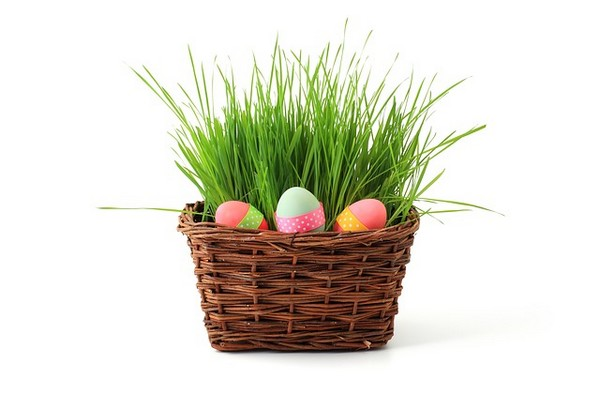 Frohe Ostern wünsch das Rügenforum